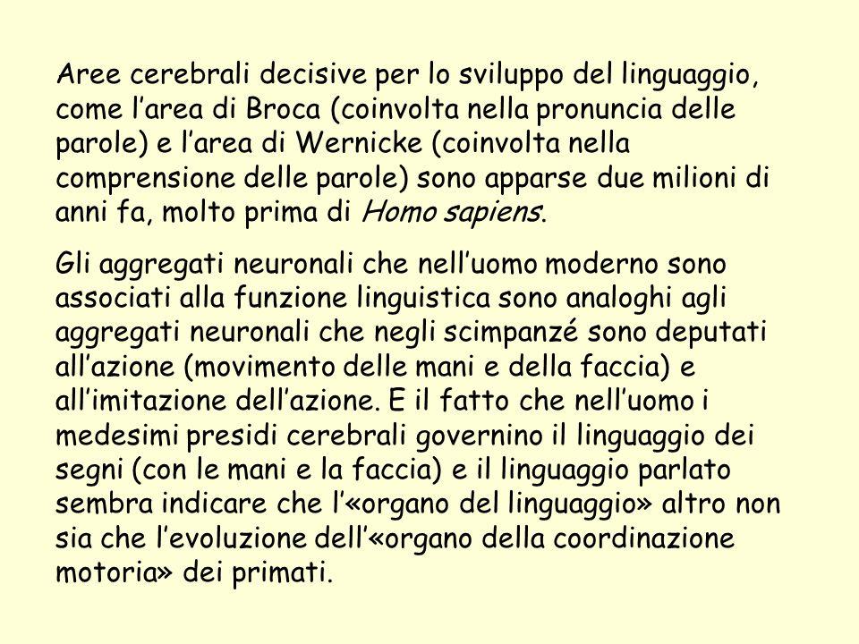Aree cerebrali decisive per lo sviluppo del linguaggio, come l'area di Broca (coinvolta nella pronuncia delle parole) e l'area di Wernicke (coinvolta nella comprensione delle parole) sono apparse due milioni di anni fa, molto prima di Homo sapiens.