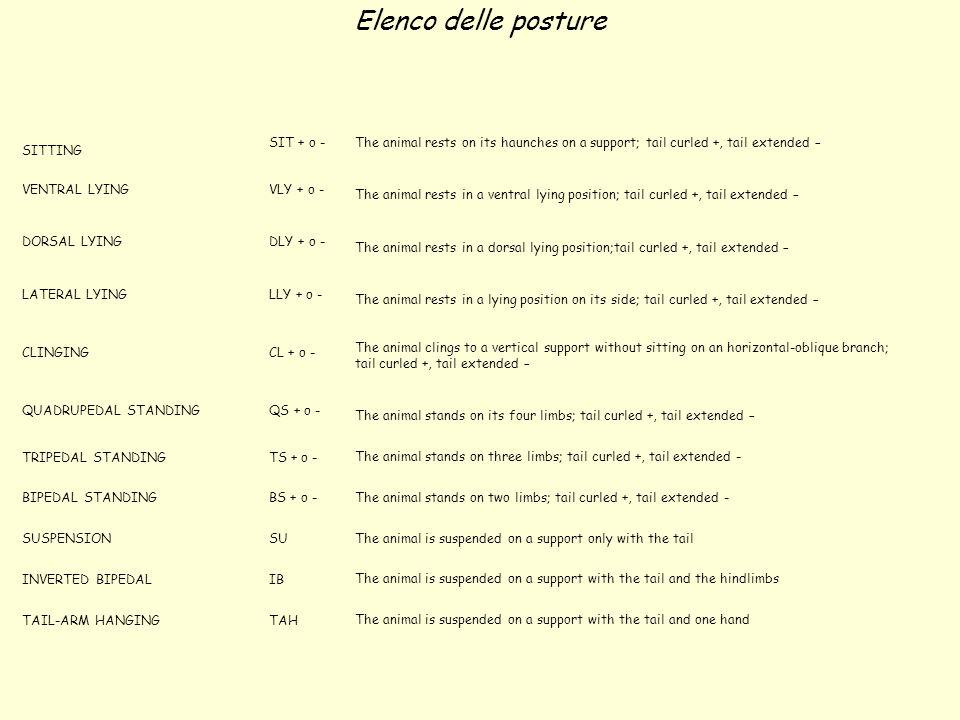 Elenco delle posture SITTING SIT + o -