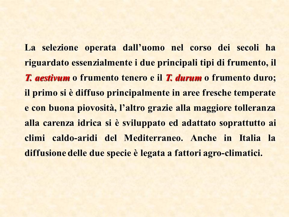 La selezione operata dall'uomo nel corso dei secoli ha riguardato essenzialmente i due principali tipi di frumento, il T.