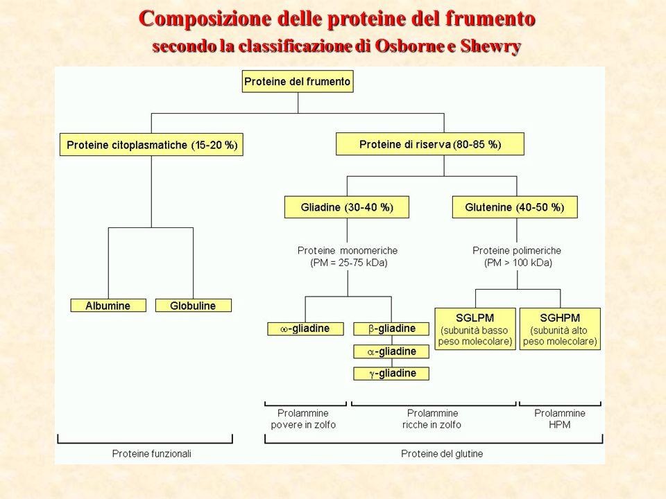 Composizione delle proteine del frumento