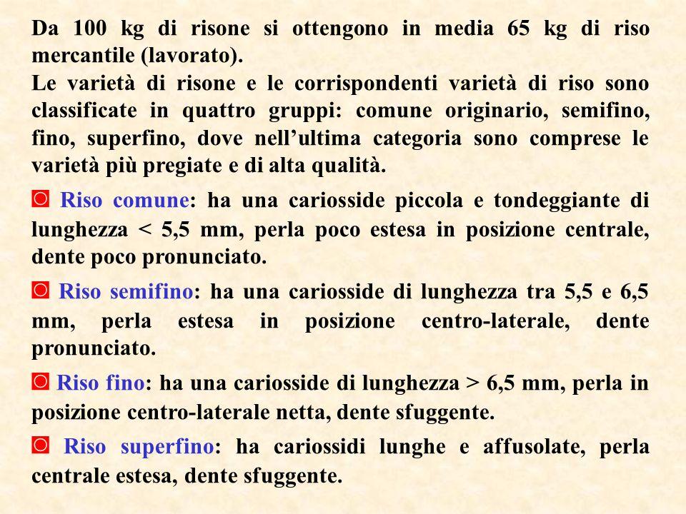 Da 100 kg di risone si ottengono in media 65 kg di riso mercantile (lavorato).