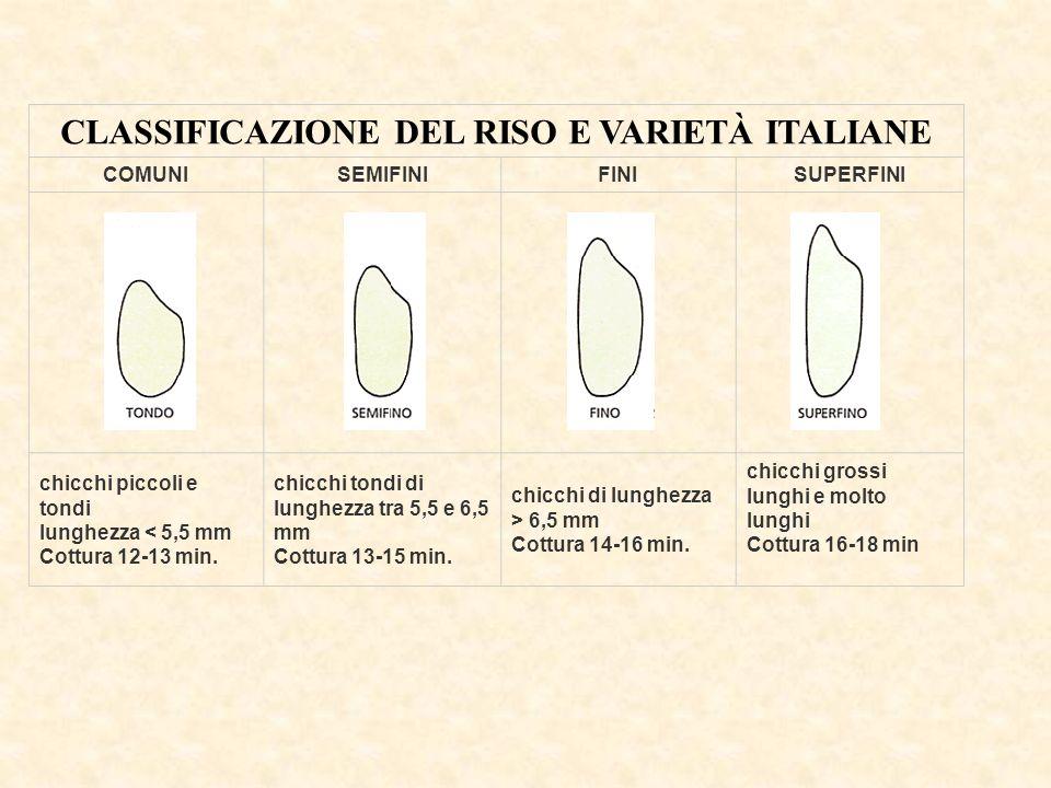 CLASSIFICAZIONE DEL RISO E VARIETÀ ITALIANE
