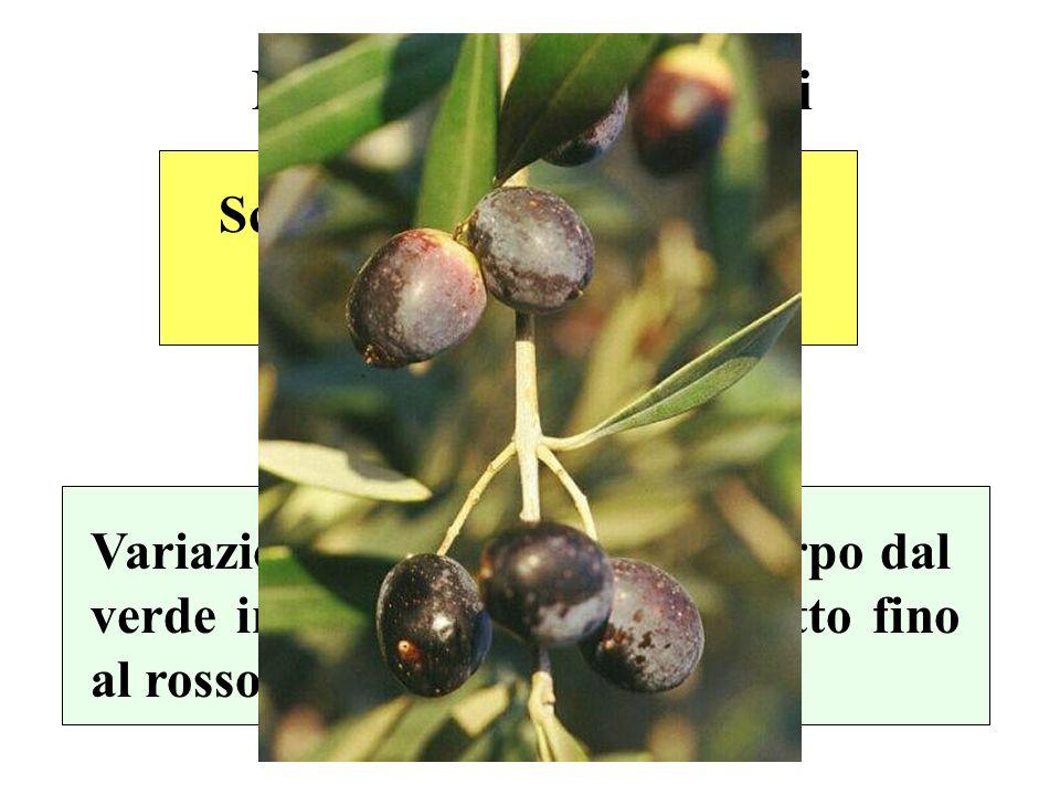 Maturazione dei frutti Scomparsa delle clorofille