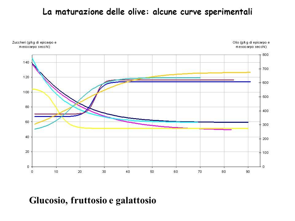 La maturazione delle olive: alcune curve sperimentali