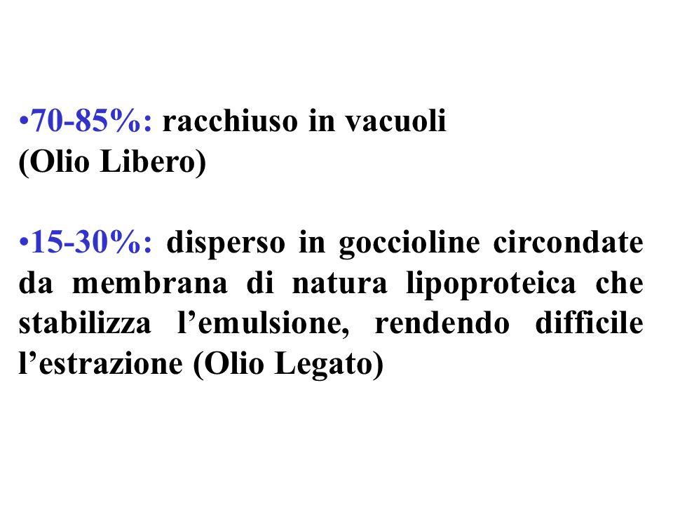 70-85%: racchiuso in vacuoli
