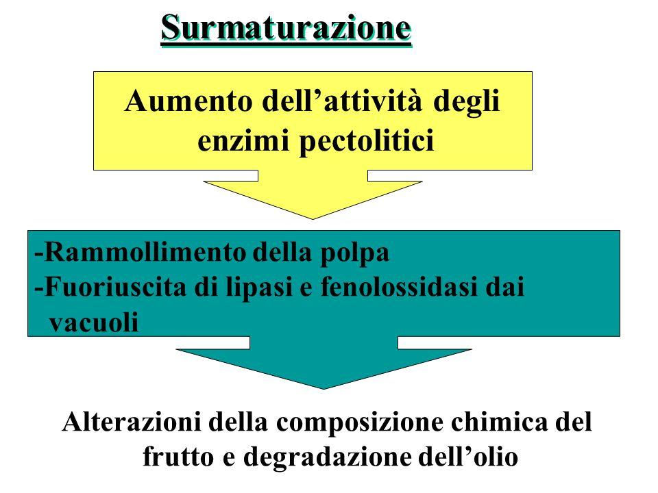 Surmaturazione Aumento dell'attività degli enzimi pectolitici