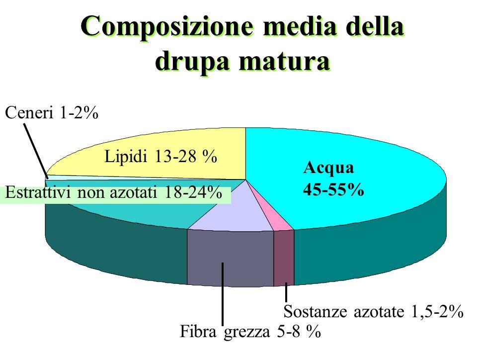 Composizione media della drupa matura