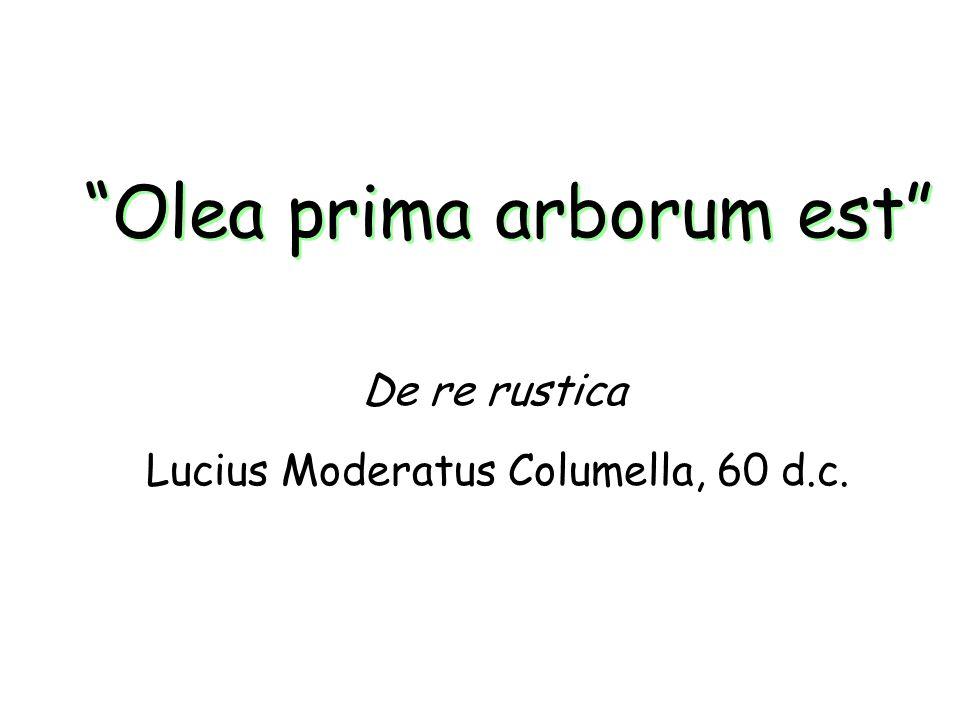 Olea prima arborum est