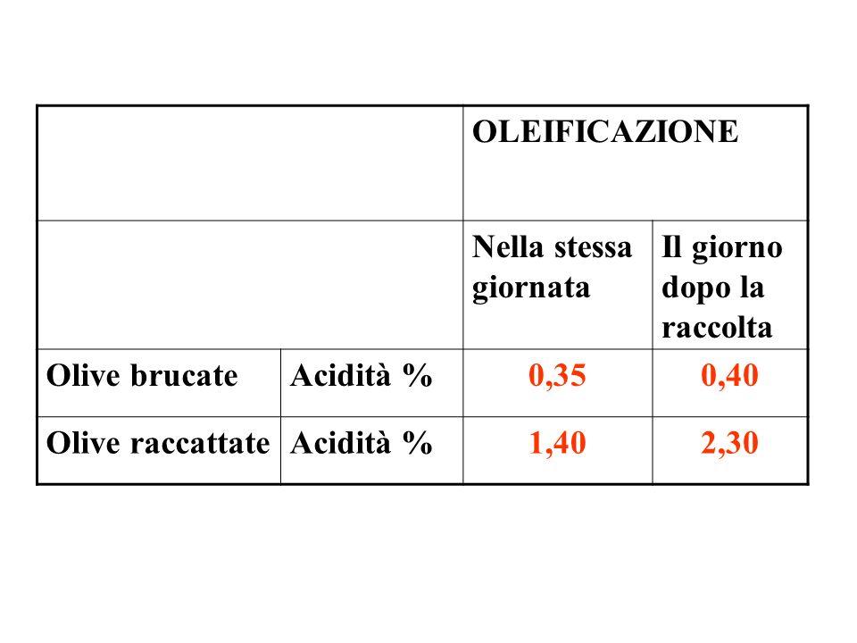 OLEIFICAZIONE Nella stessa giornata. Il giorno dopo la raccolta. Olive brucate. Acidità % 0,35.