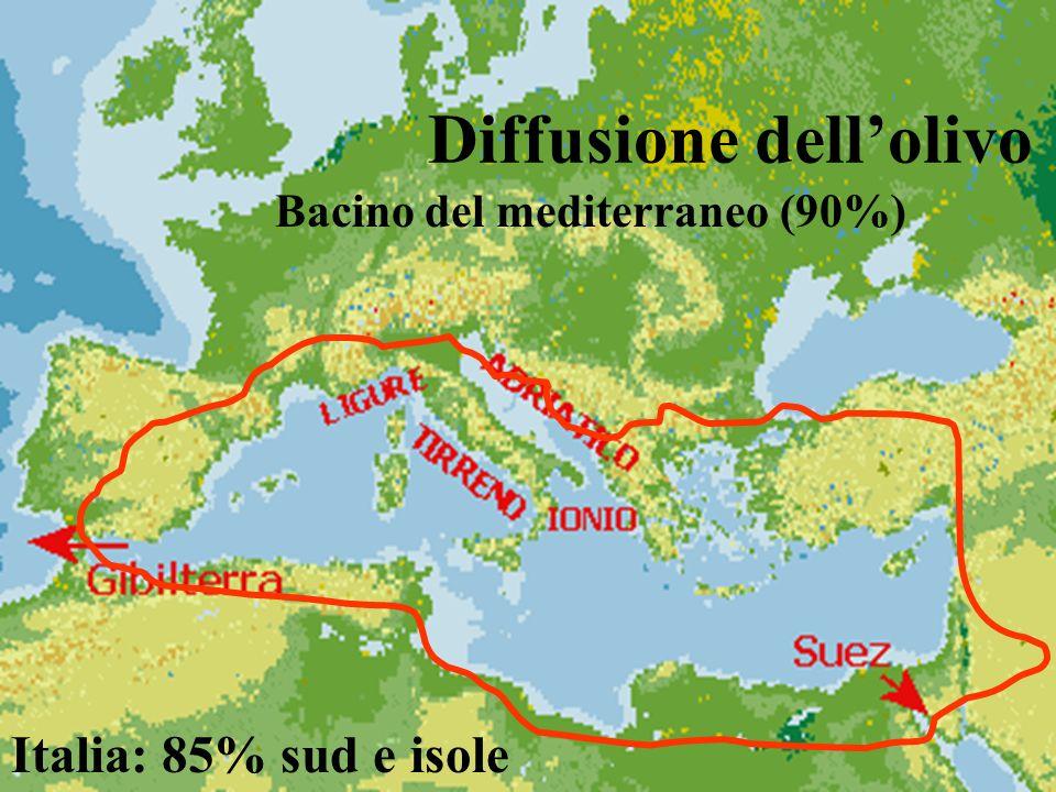 Diffusione dell'olivo