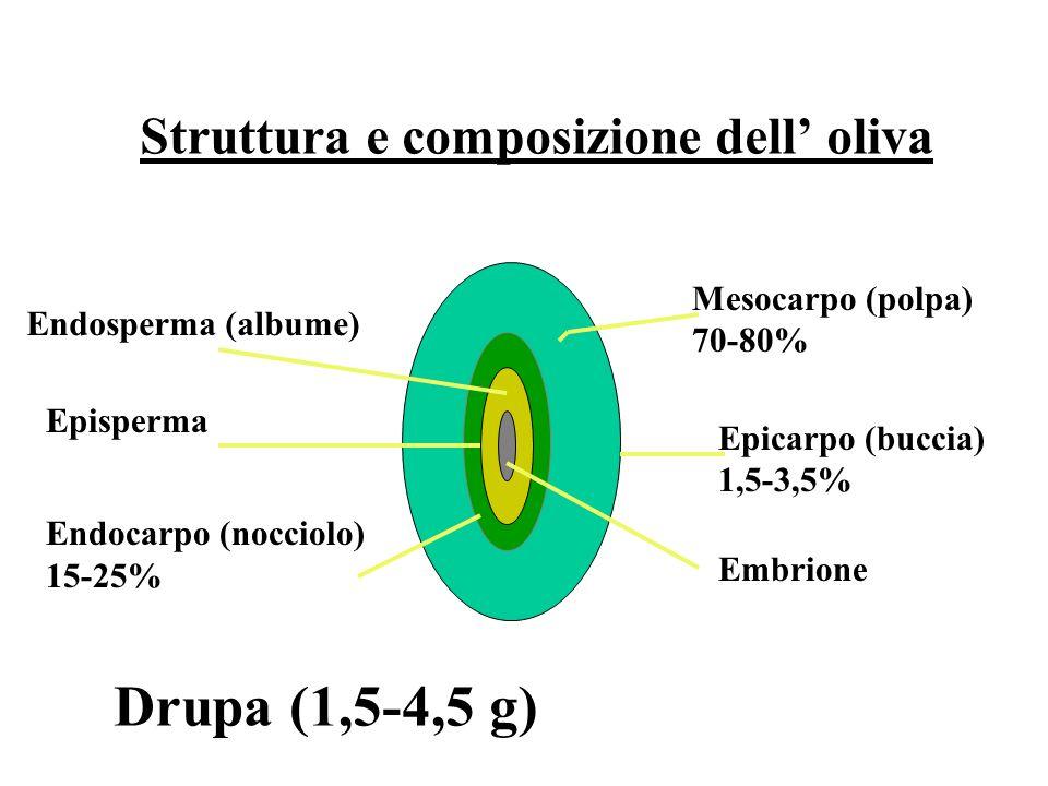 Struttura e composizione dell' oliva