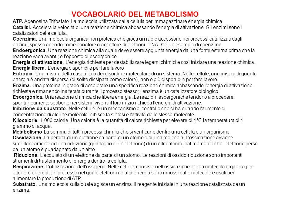 VOCABOLARIO DEL METABOLISMO