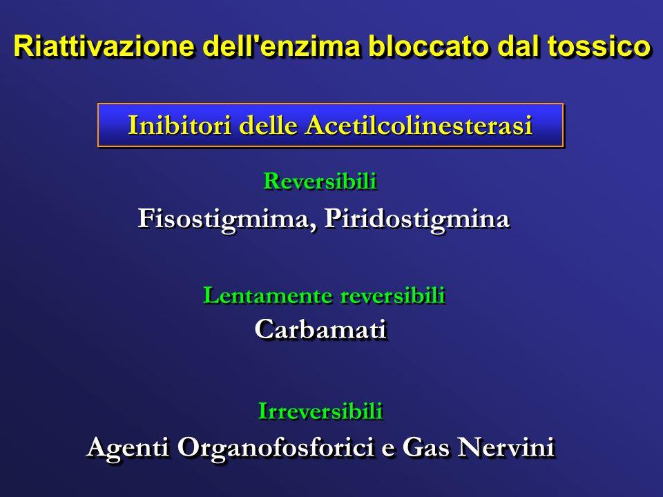 Riattivazione dell enzima bloccato dal tossico