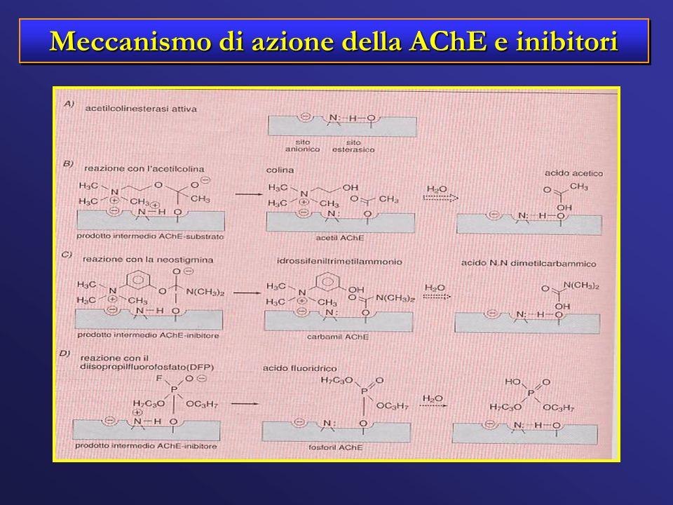Meccanismo di azione della AChE e inibitori
