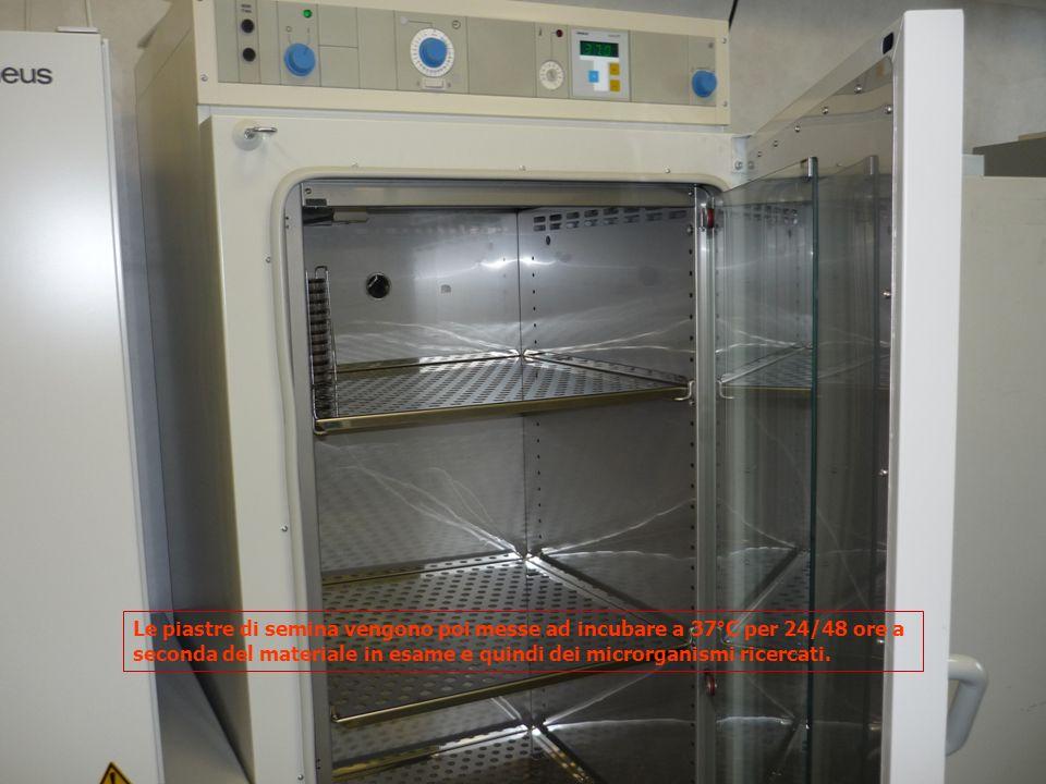 Le piastre di semina vengono poi messe ad incubare a 37°C per 24/48 ore a