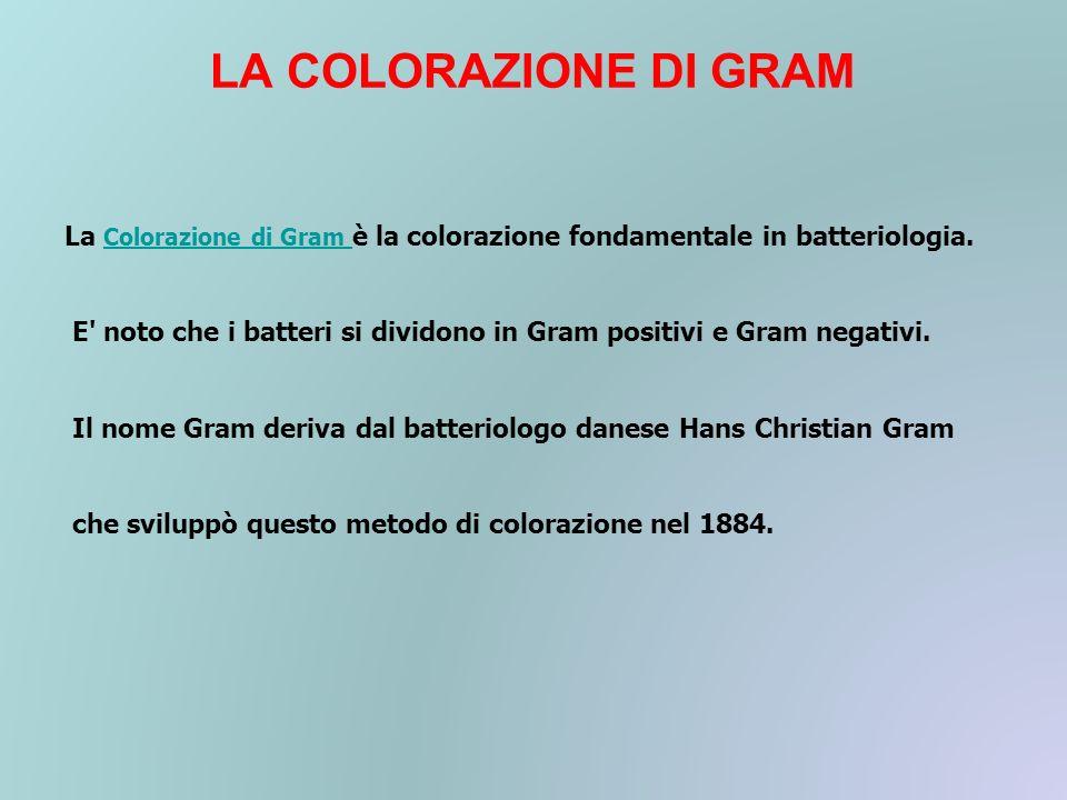 LA COLORAZIONE DI GRAM La Colorazione di Gram è la colorazione fondamentale in batteriologia.