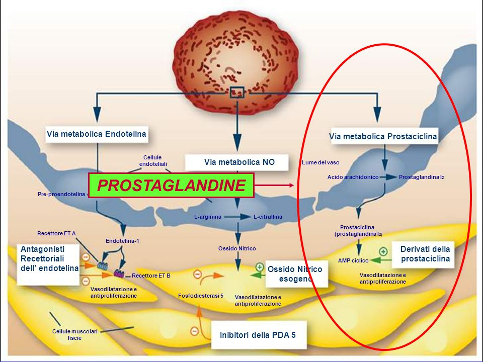 PROSTAGLANDINE Via metabolica Endotelina Via metabolica Prostaciclina