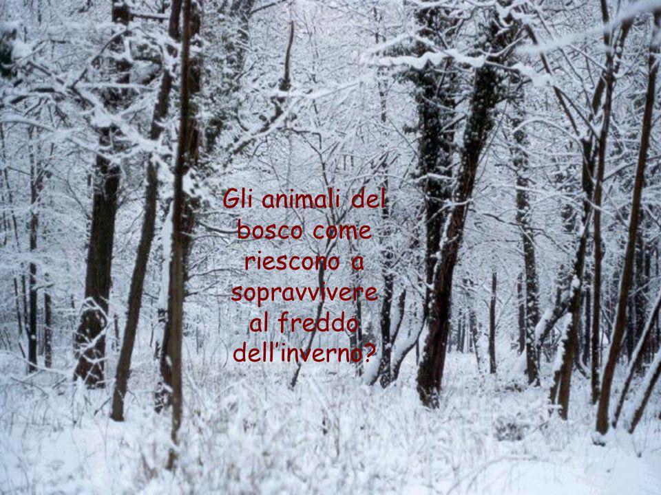 Gli animali del bosco come riescono a sopravvivere al freddo dell'inverno