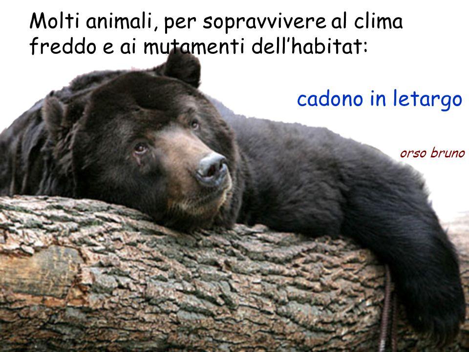 Molti animali, per sopravvivere al clima freddo e ai mutamenti dell'habitat: