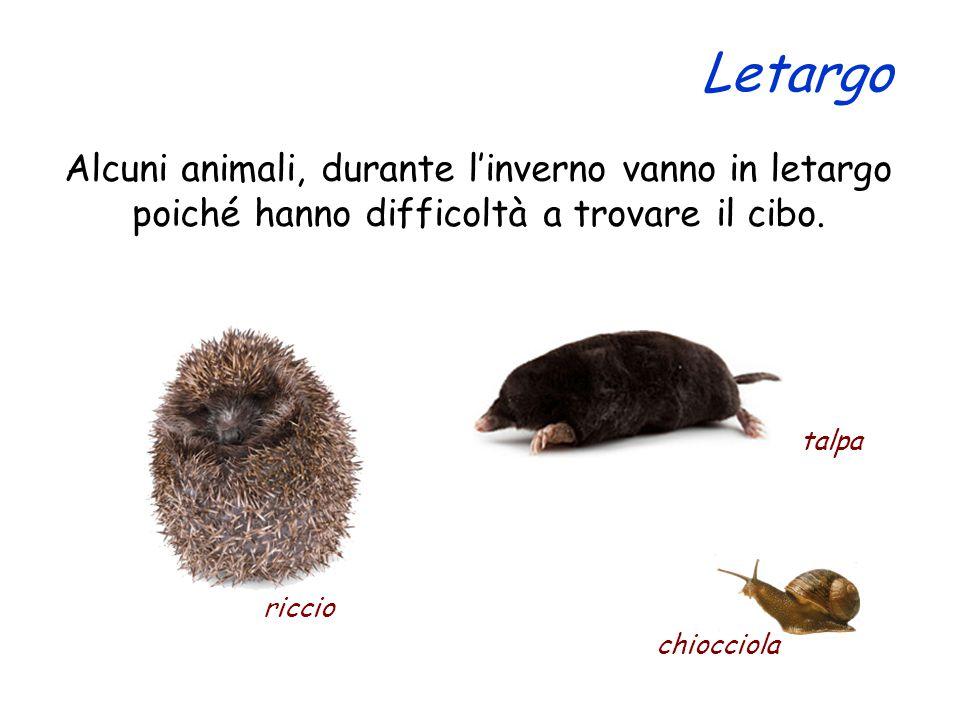 Letargo Alcuni animali, durante l'inverno vanno in letargo poiché hanno difficoltà a trovare il cibo.