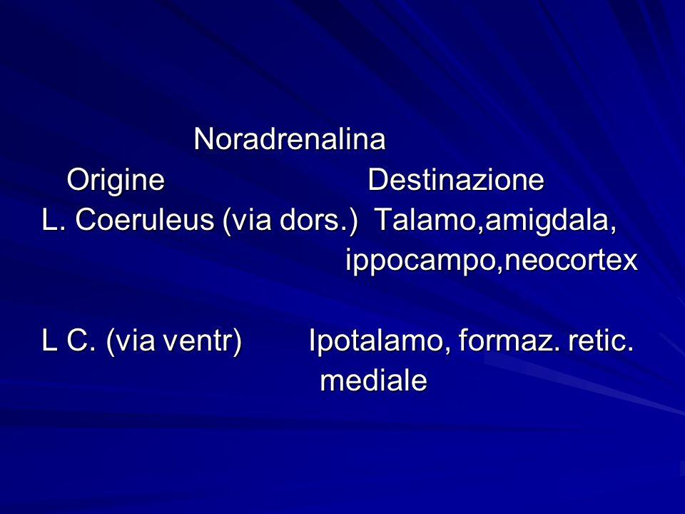Noradrenalina Origine Destinazione. L. Coeruleus (via dors.) Talamo,amigdala,