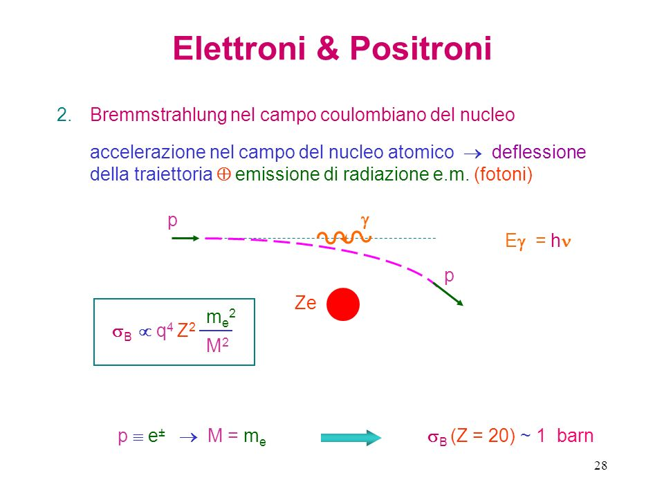 Elettroni & Positroni Bremmstrahlung nel campo coulombiano del nucleo