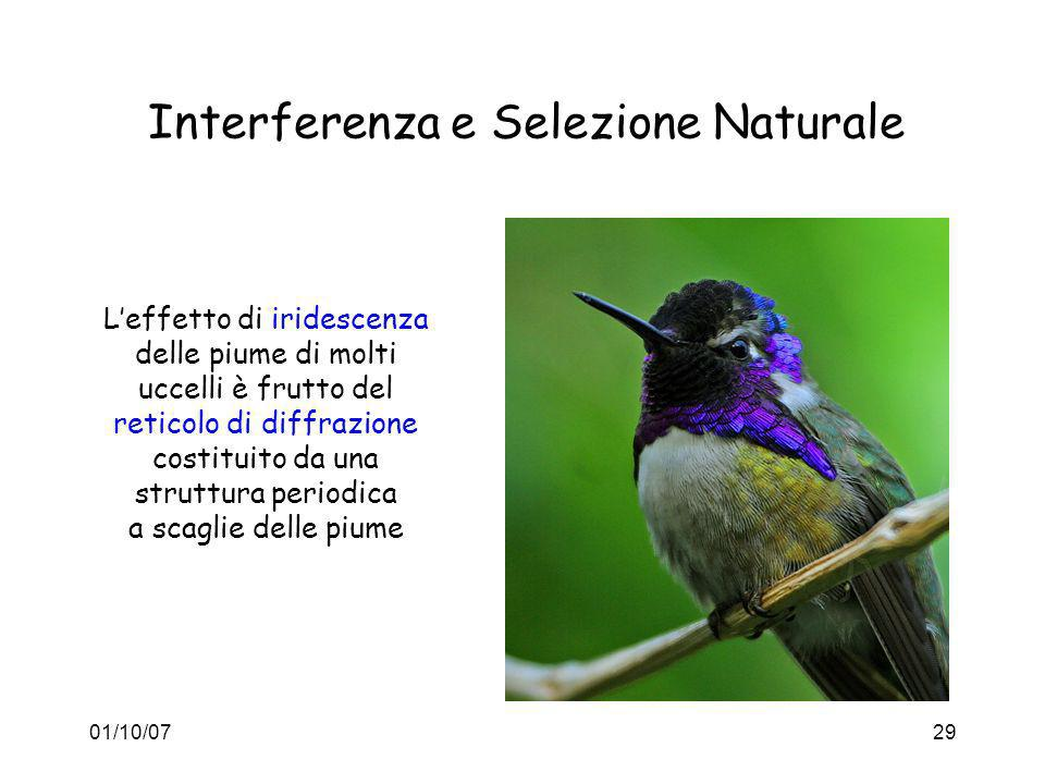 Interferenza e Selezione Naturale