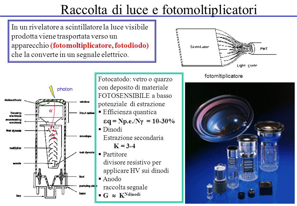 Raccolta di luce e fotomoltiplicatori