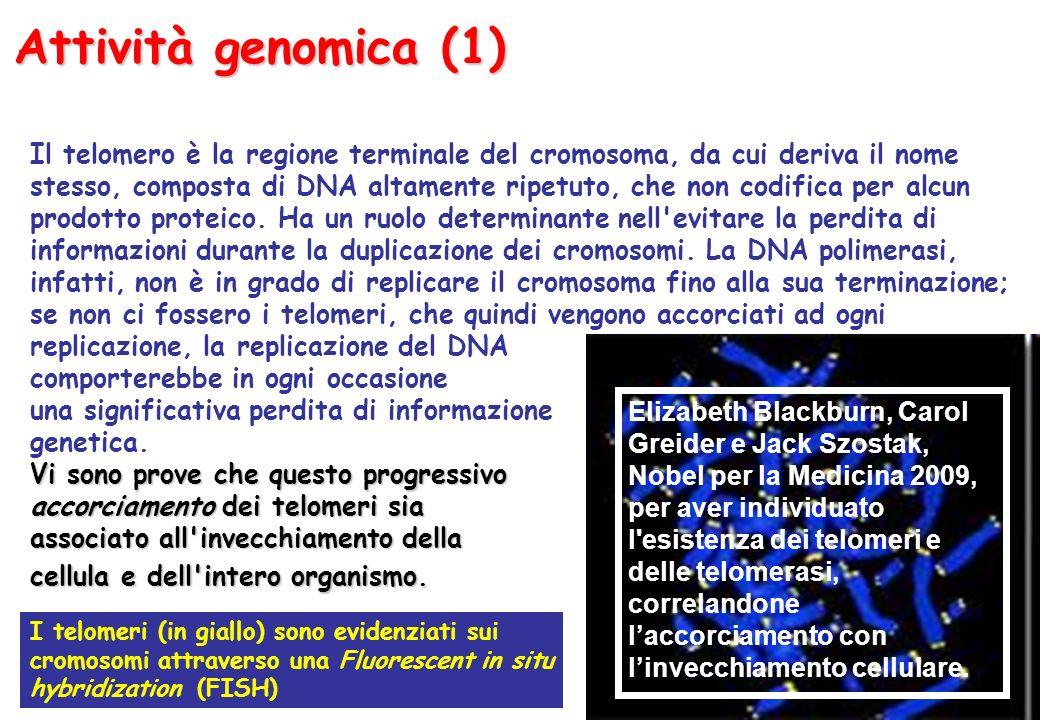 Attività genomica (1)