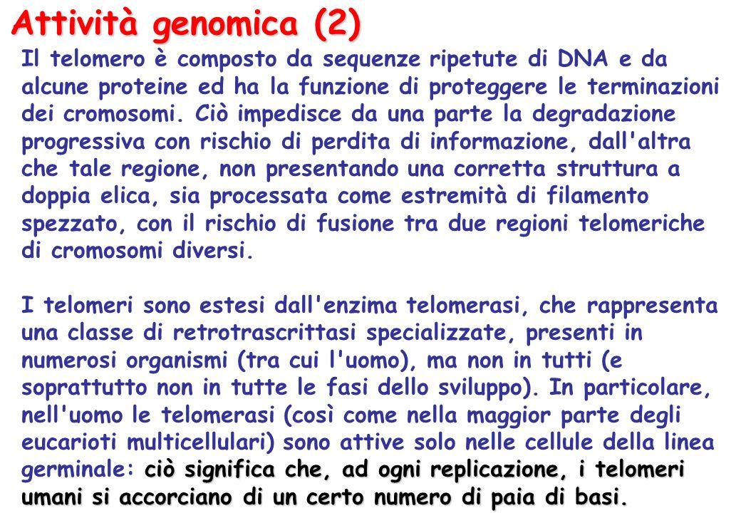 Attività genomica (2)