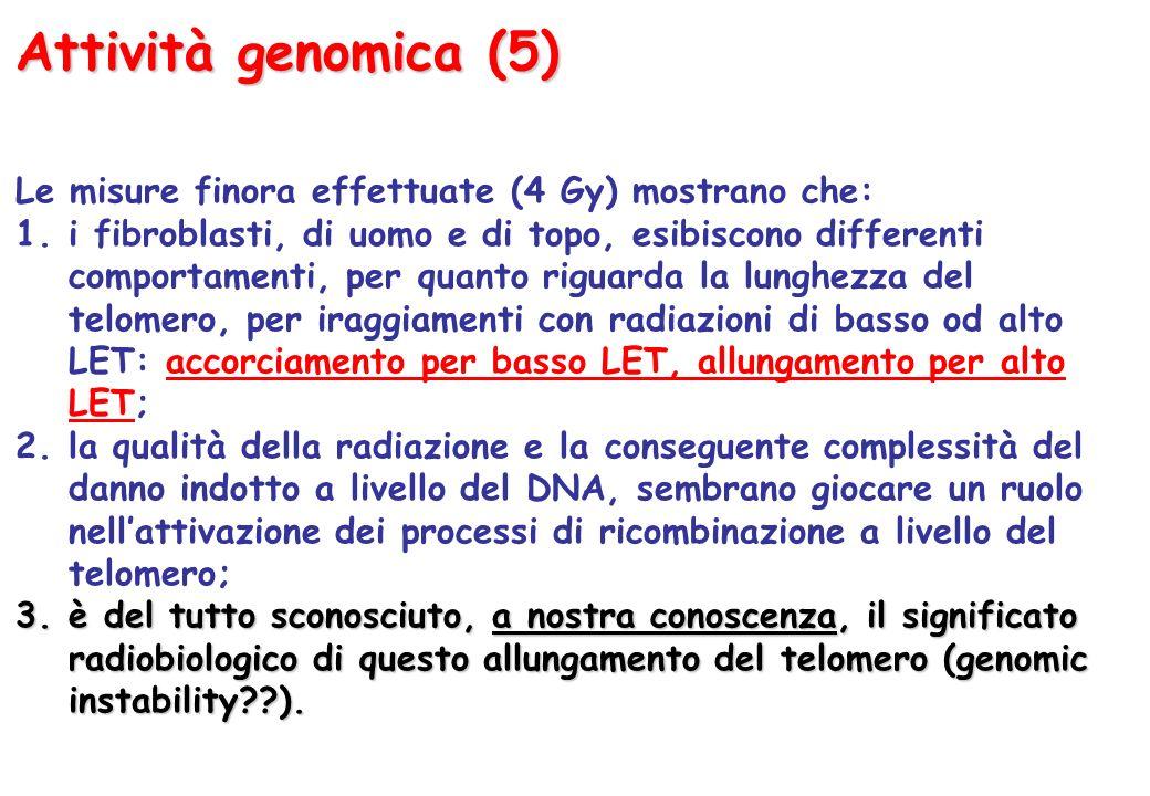 Attività genomica (5) Le misure finora effettuate (4 Gy) mostrano che: