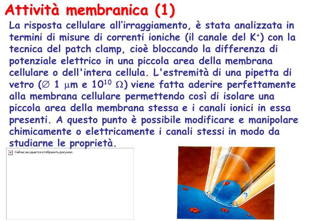 Attività membranica (1)