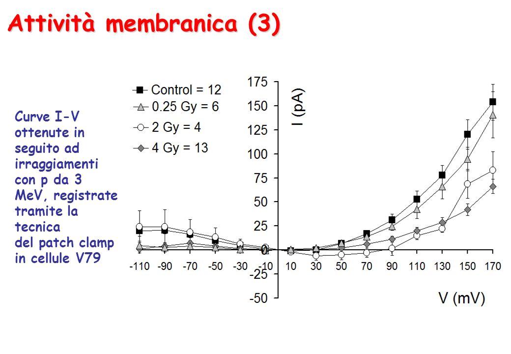 Attività membranica (3)