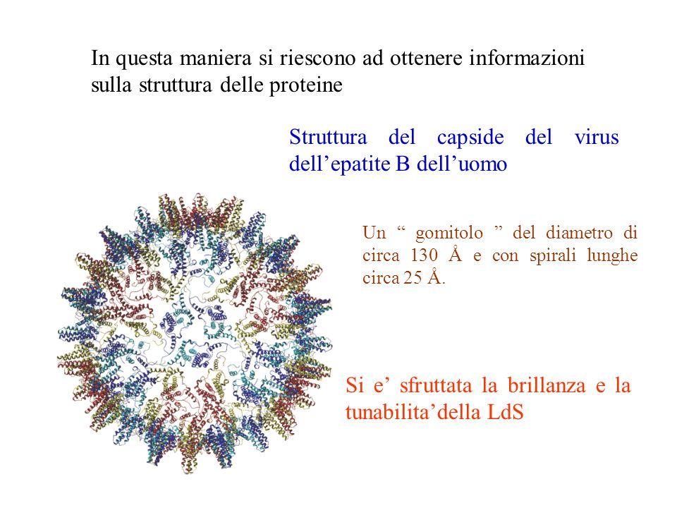 Struttura del capside del virus dell'epatite B dell'uomo