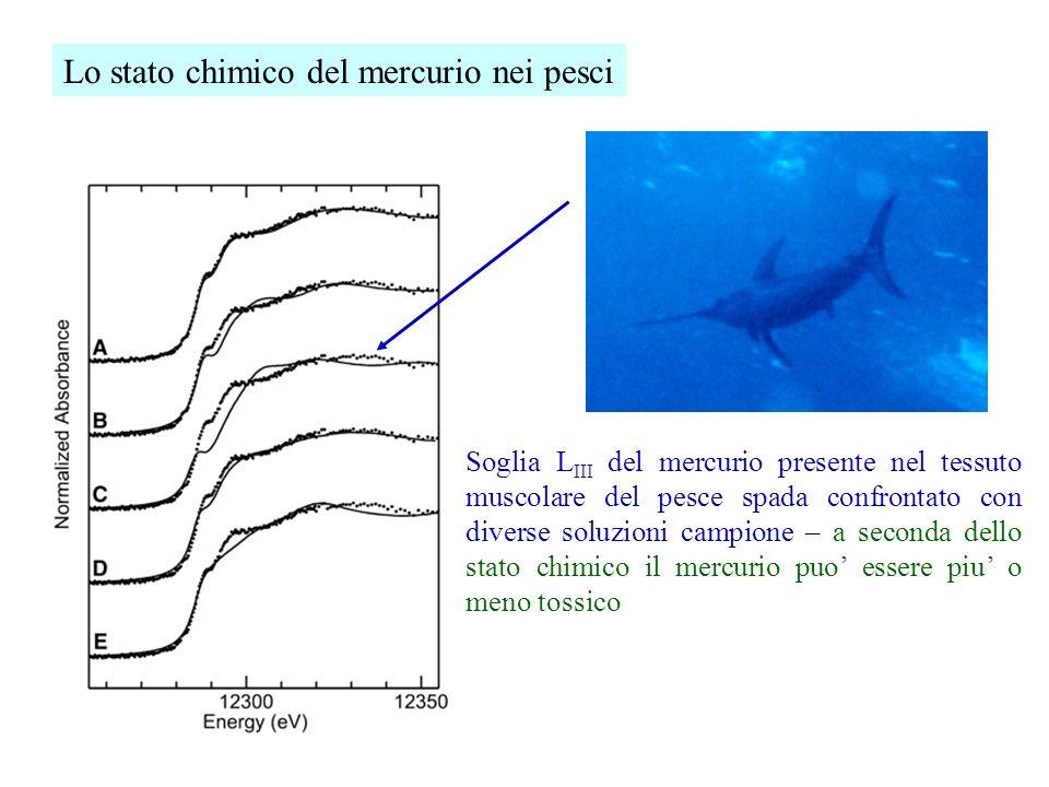 Lo stato chimico del mercurio nei pesci