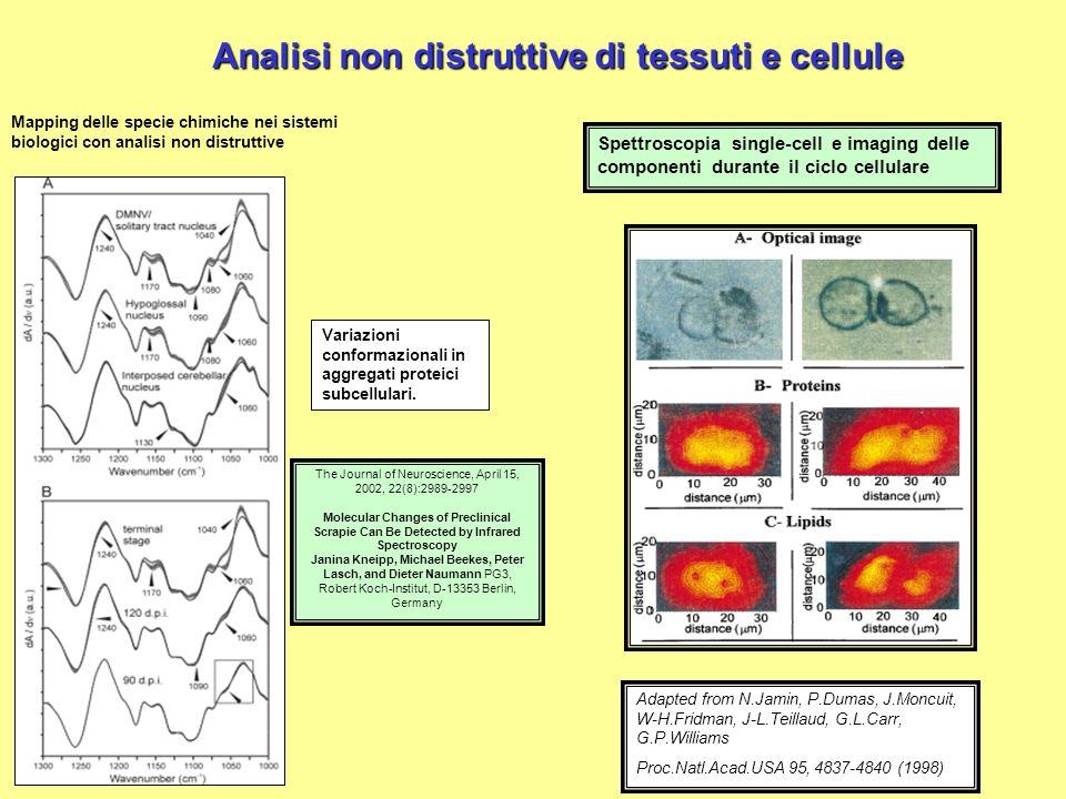 Analisi non distruttive di tessuti e cellule