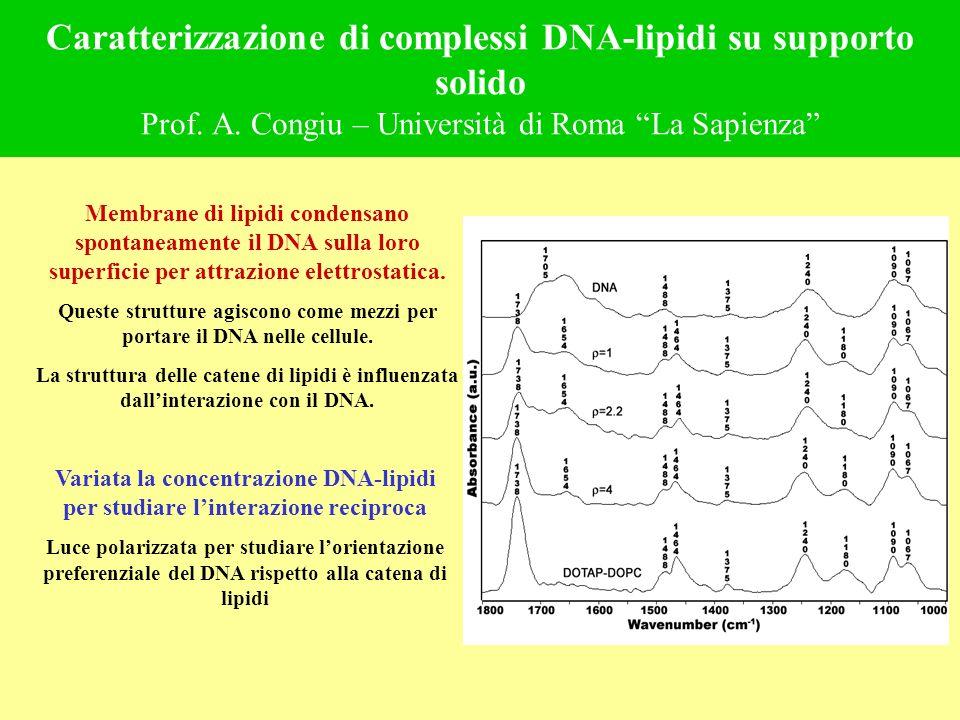 Queste strutture agiscono come mezzi per portare il DNA nelle cellule.