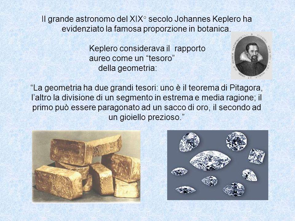 Il grande astronomo del XIX° secolo Johannes Keplero ha evidenziato la famosa proporzione in botanica.