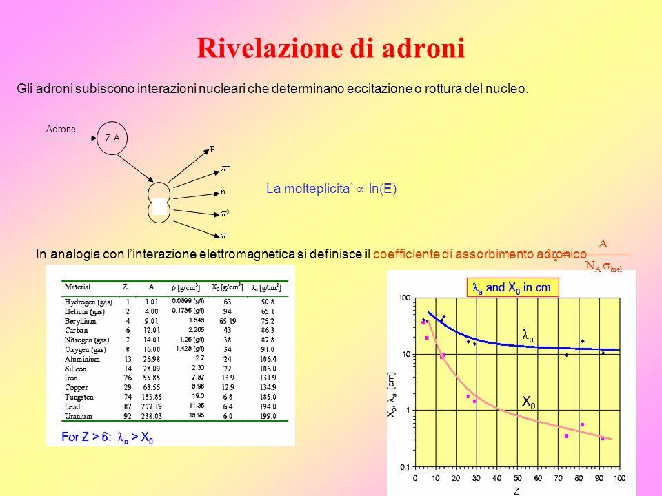 Rivelazione di adroni Gli adroni subiscono interazioni nucleari che determinano eccitazione o rottura del nucleo.