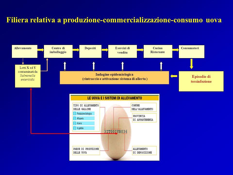 Filiera relativa a produzione-commercializzazione-consumo uova
