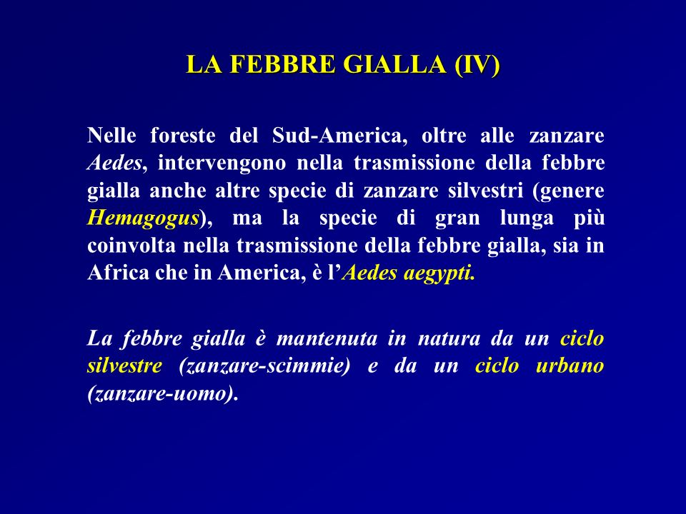 LA FEBBRE GIALLA (IV)