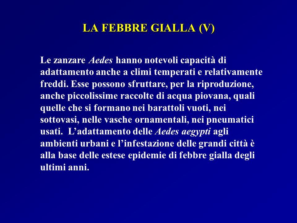 LA FEBBRE GIALLA (V)