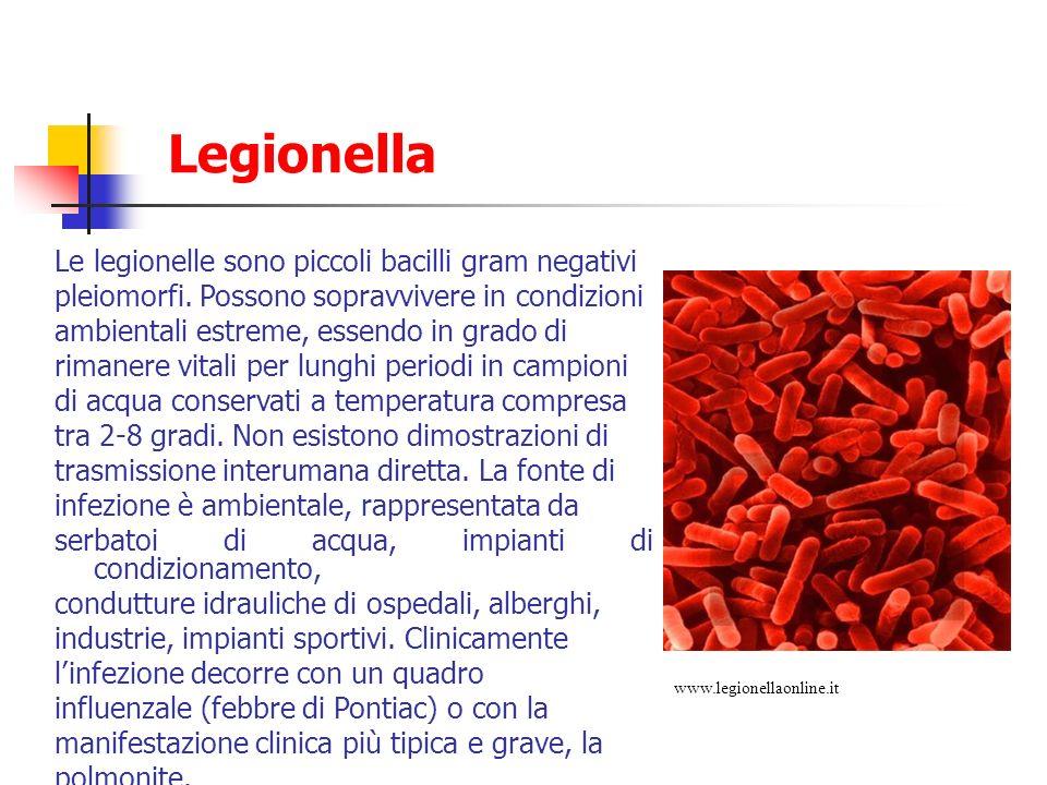 Legionella Le legionelle sono piccoli bacilli gram negativi
