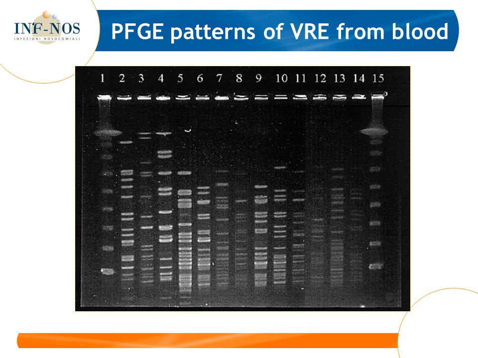 PFGE patterns of VRE from blood