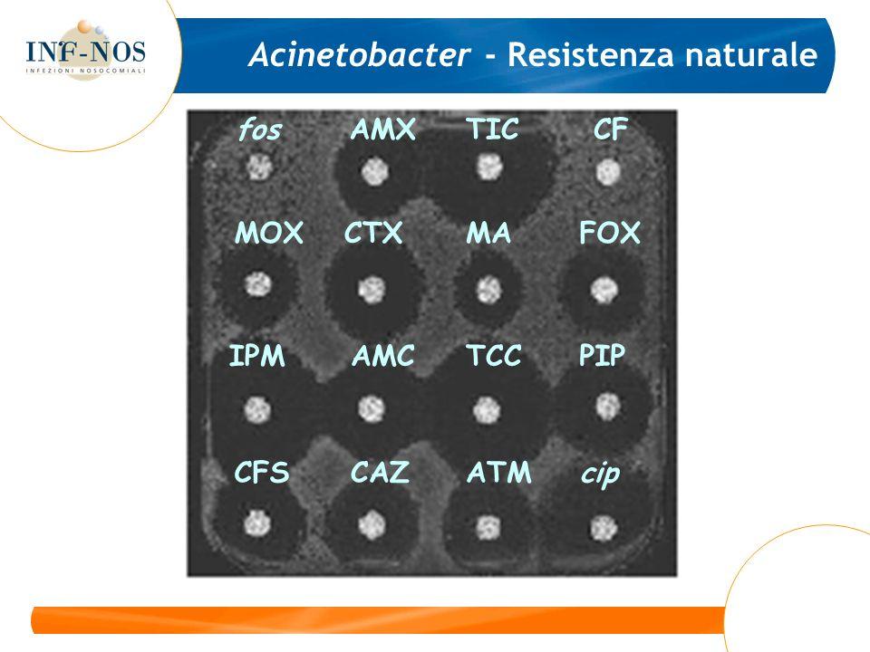 Acinetobacter - Resistenza naturale