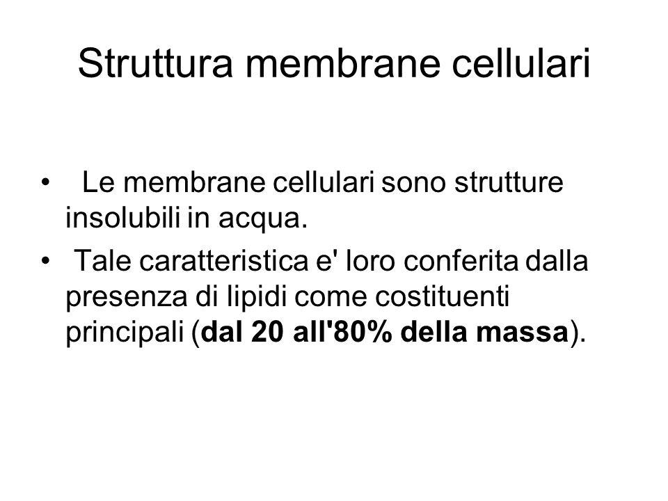 Struttura membrane cellulari