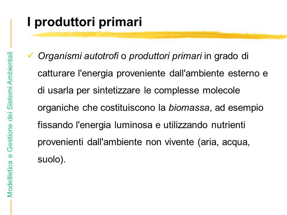 I produttori primari