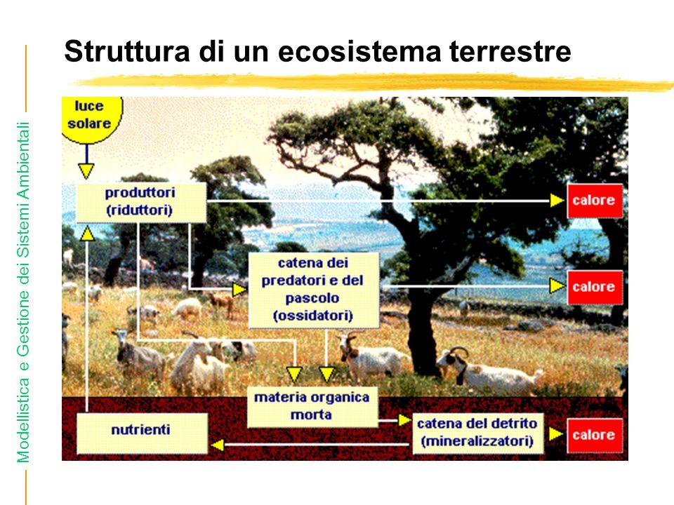 Struttura di un ecosistema terrestre