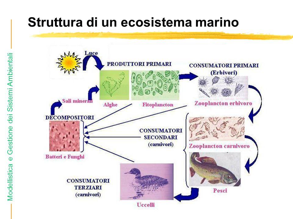 Struttura di un ecosistema marino