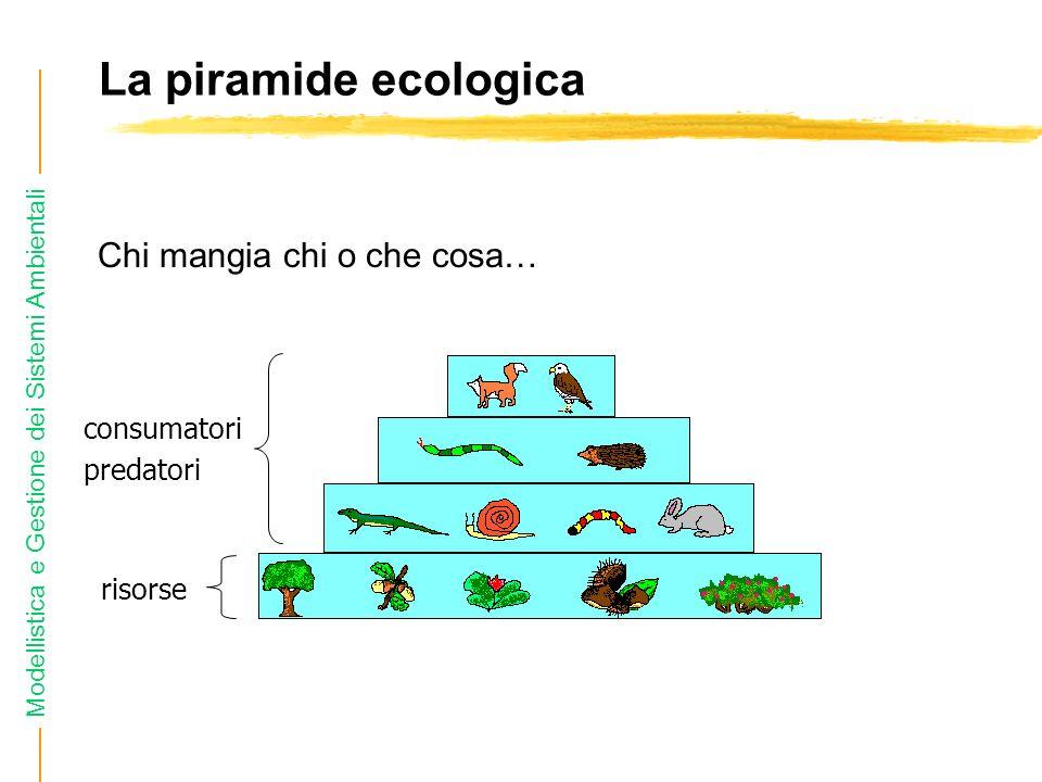 La piramide ecologica Chi mangia chi o che cosa… consumatori predatori